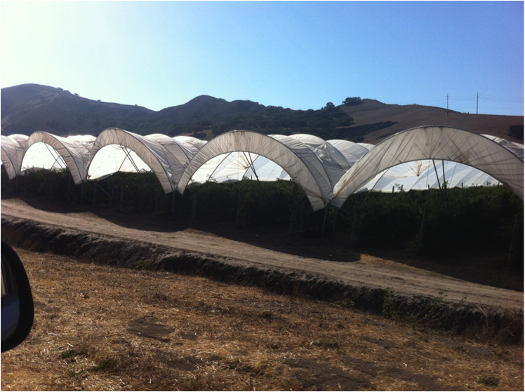 hoop houses sds.png