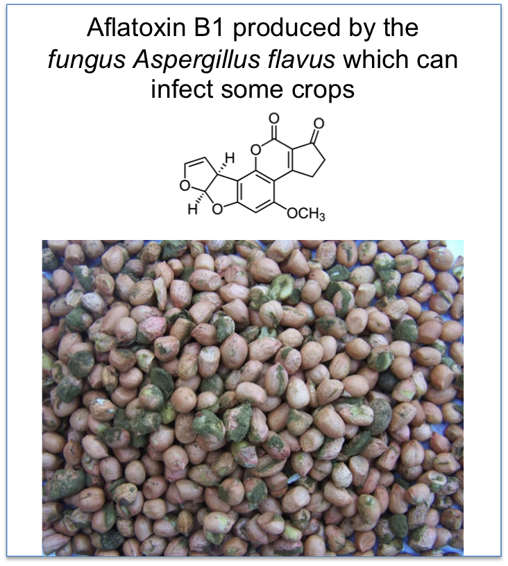 nature-aflatoxin